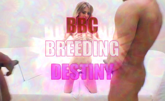BBC Breeding Destiny